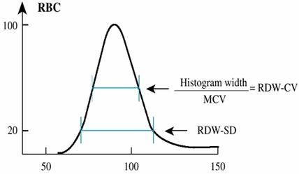 Rdw в клиническом анализе крови